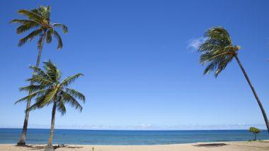 ハワイのおしゃれな帽子が手に入る最旬トレンド4店