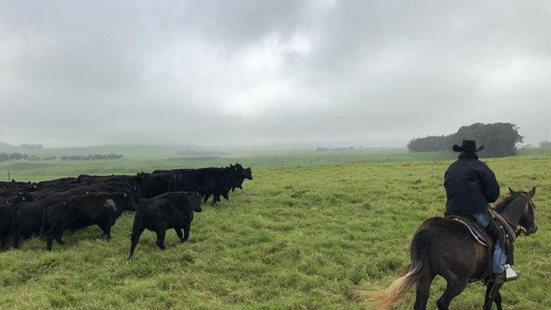 もともとハワイに牛はいなかった?牛から紐解くハワイの農業ヒストリー