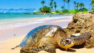 アウトドア・ハワイ/Outdoor Hawaii