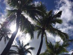 年に2回ハワイで起こる不思議現象とは!?