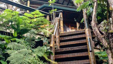 ハワイ島でツリーハウスに滞在して大自然を満喫!