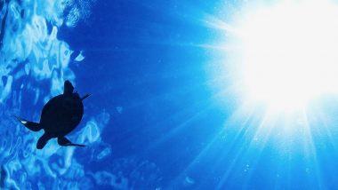 ハワイでシュノーケルをより楽しくするには?海で出会える魚たちもご紹介!