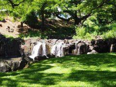 リリウオカラニ植物園に行ってみた!ハワイ固有の植物が集まる穴場!