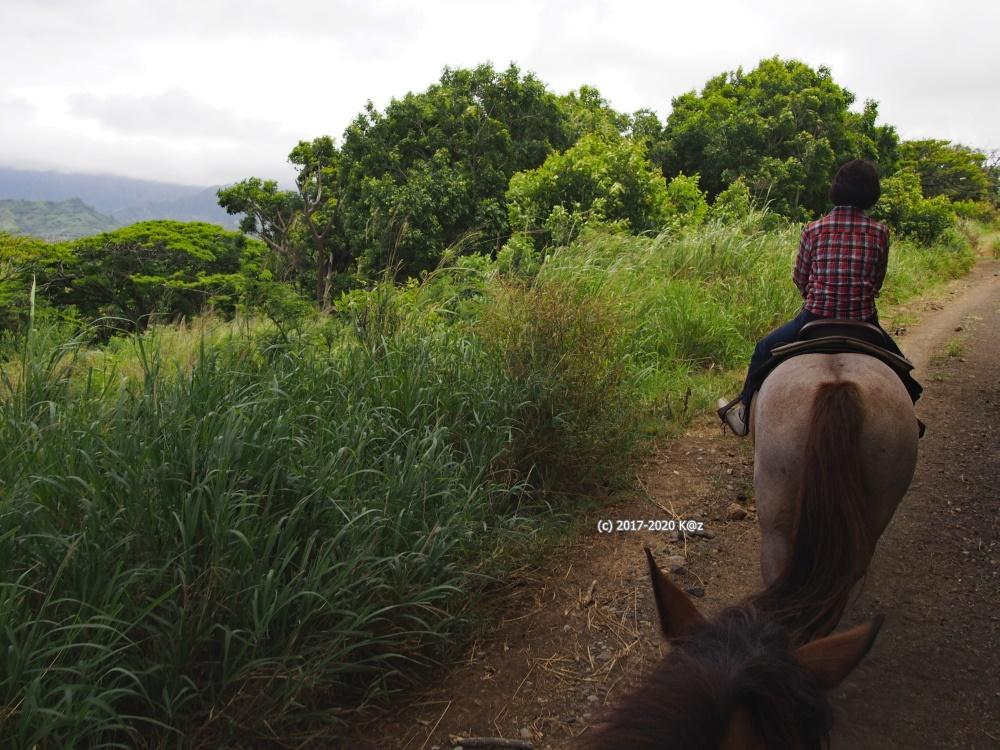 クアロアランチ 乗馬2