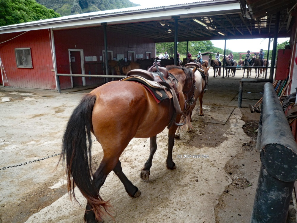 クアロアランチ 乗馬