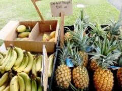 移転先探し中?毎週日曜開催の「カイルアファーマーズマーケット」が現在の場所での開催を6月末で終了
