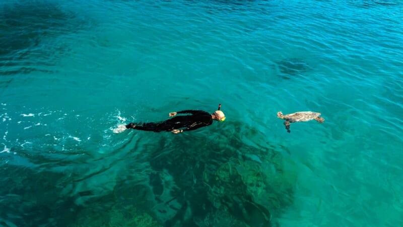 ハワイのホヌ(ウミガメ)についてもっと知ろう!最新ニュースや噂についてご紹介