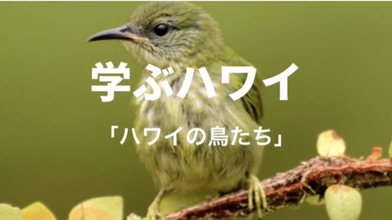 【学ぶハワイ】ハワイの鳥を学ぼう