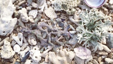 【それ違法です!】ハワイの砂・石・サンゴの持ち帰りに注意