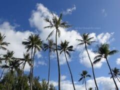 【4月12日現在】ハワイ・オアフ島で規制緩和計画がTier3(第3段階)に留まる
