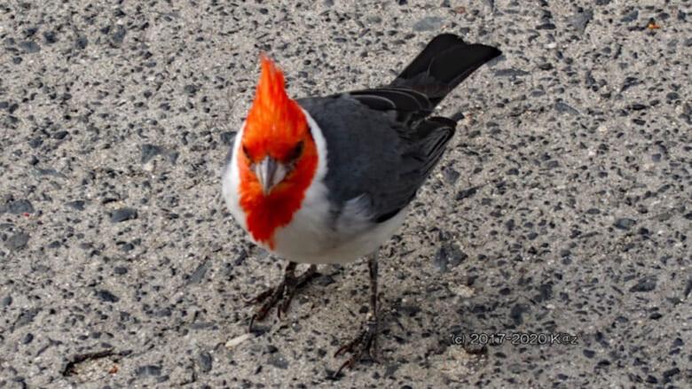 ハワイで出会える可愛い鳥たち