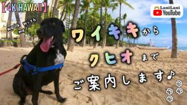 【4K HAWAII】ワイキキからクヒオまでご案内!マイケルくんとハワイのビーチ巡り