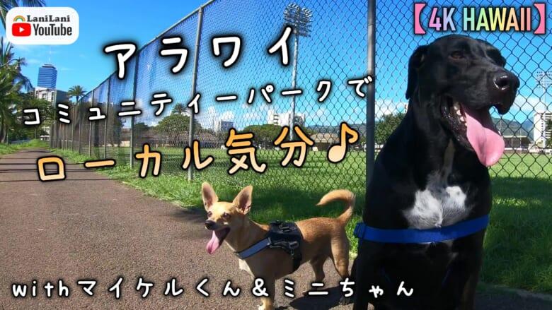 【4K HAWAII】アラワイコミュニティーパークでローカル気分!マイケルくん&ミニちゃんと公園へお出かけ♪