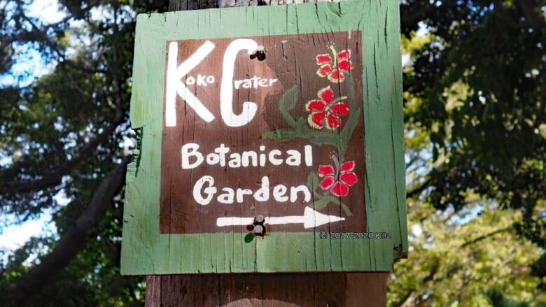 プルメリアがたくさん咲いている植物園「ココ・クレーター・ボタニカル・ガーデン/ Koko Crater Botanical Garden」