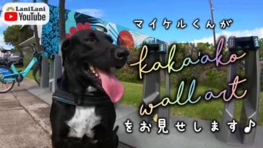【4K HAWAII】ハワイのインスタ映えスポットといえば「カカアコウォールアート」!マイケルくんと一緒に巡りましょう♪