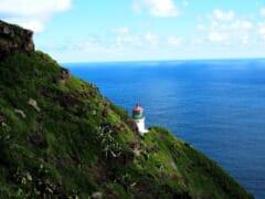 【在住者レポート】ハワイにホエールウォッチングの季節到来!マカプウトレイルにクジラを見に行こう