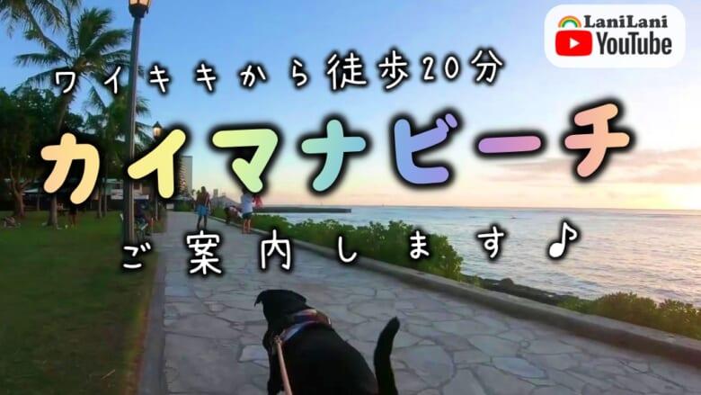 【4K HAWAII】癒されること間違いなし♪マイケルとミニと一緒に夕暮れどきのカイマナビーチをお散歩