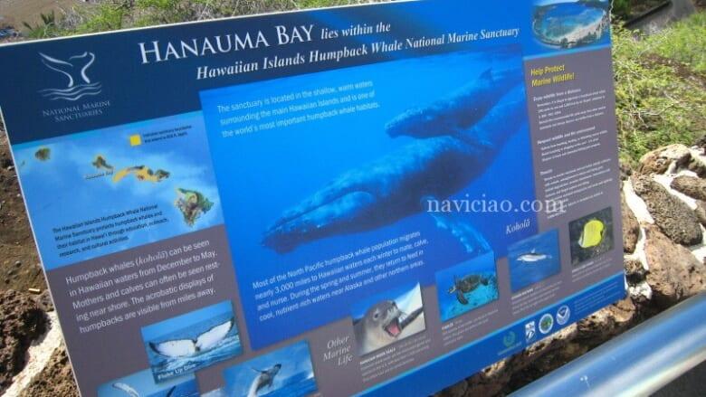 【7月4日現在】ハワイ・ハナウマ湾の入場料再値上げ!オンライン予約システムも開始