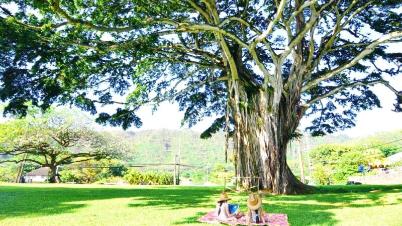 【ハワイ現地から】ハワイ大神宮でお参りの後は、「ヌアヌバレーパーク/Nu'uanu Valley Park」でパワーチャージ!