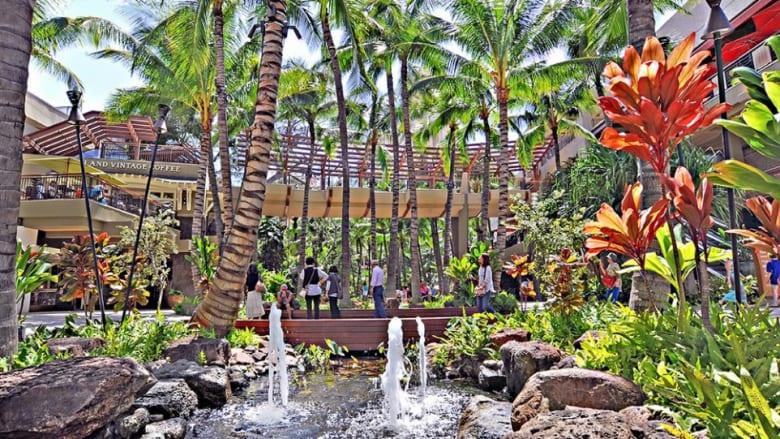 4月30日はアーバーデイ!ワイキキのロイヤルグローブで、椰子の魅力に触れよう
