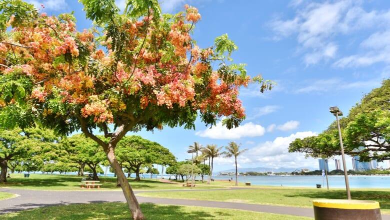 ハワイで季節を感じられる♪ハワイの「シャワーツリー」についてもっと知ろう