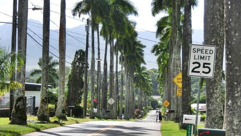 ハワイのドライブ旅におすすめ!ワヒアワにある「ロイヤルパームドライブ」という素敵な道