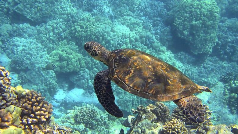 ハワイの未来を守るために私たちができること ~SDGsの取り組みから考えてみた~