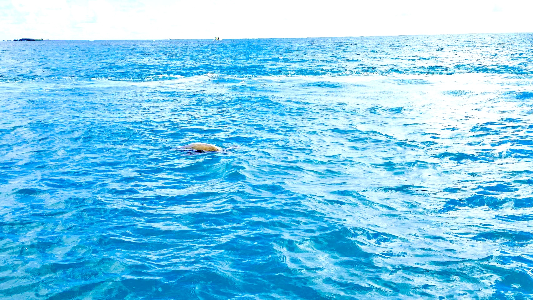 4ウミガメ