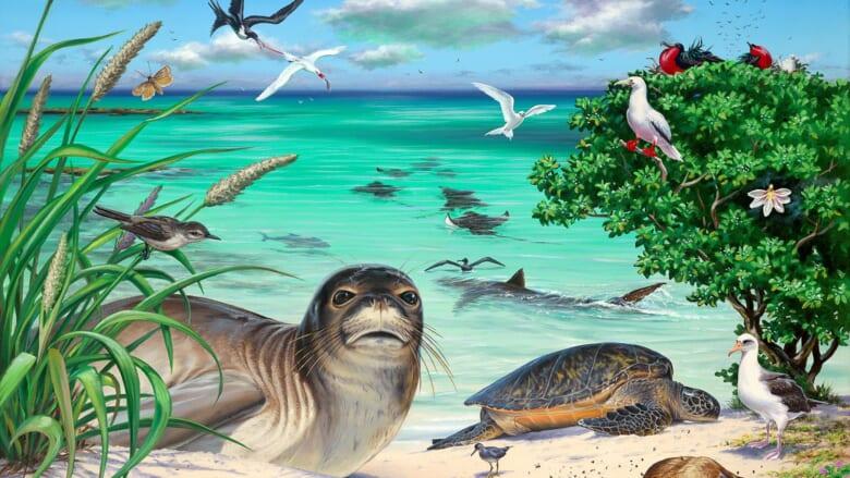 【徹底解説】一度は行くべき!ハワイ州ふたつめの世界遺産「パパハーナウモクアーケア/Papahanaumokuakea Marine National Monument」