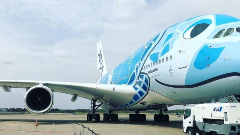 【速報】ANAホノルル線専用機材の「フライングホヌ」が北海道と沖縄の空を飛びます!