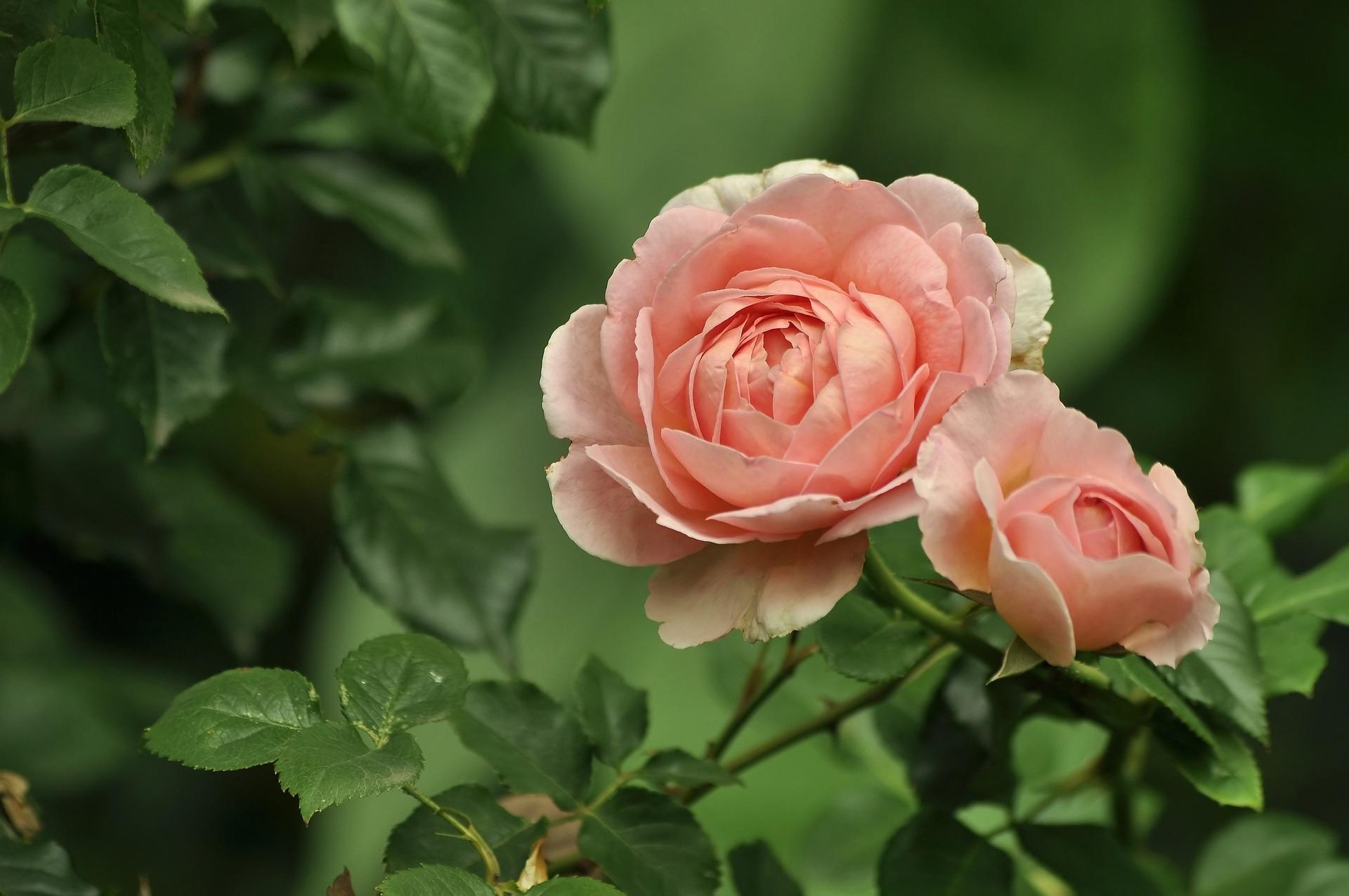 flowers-4352530_1920