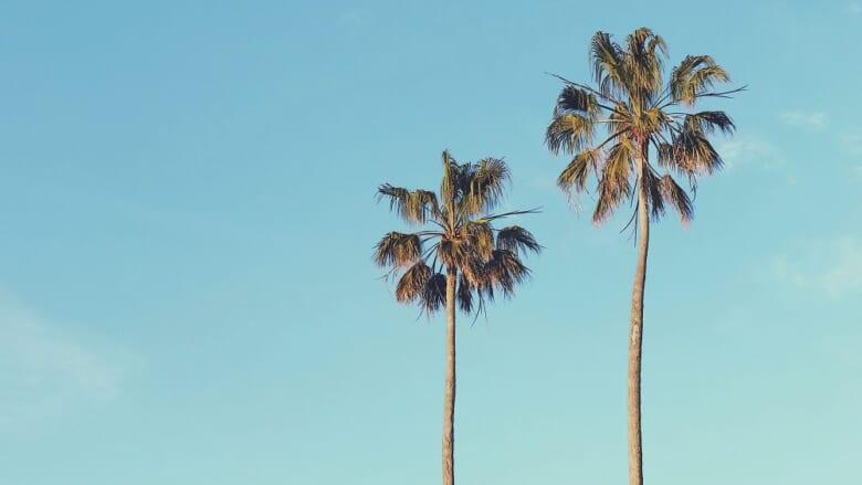 【LaniLani Music】今月のピックアップアルバムは「おうちハワイ」!