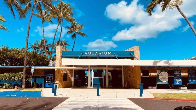 【7月26日現在】ワイキキ水族館が営業再開! YouTubeのライブ配信にも要注目♪