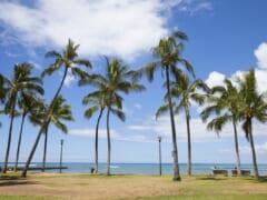 参加費無料!7月25日(日)11:00~ハワイの自然に癒される♪オンライン旅会