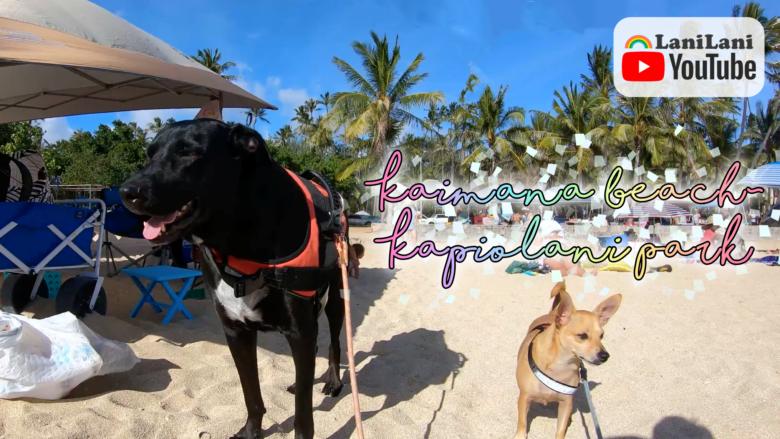 【4K HAWAII】カイマナビーチからカピオラニパークまでご案内します!マイケルくんとミニちゃんとハワイでお散歩♪