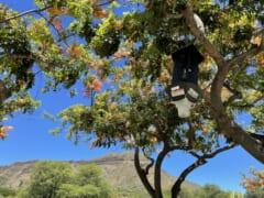 【徹底解説】ハワイの木にぶら下がっている黒い箱ってなに?カブトムシとの関係性をご紹介!