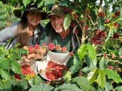 【猿田彦珈琲10周年!】ハワイのコーヒー豆品評会で1位を獲得したコナコーヒーが登場!