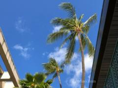 ハワイの「Safe Access Oahu Program」とは?レストランなどの利用時に接種証明・陰性証明を提示義務