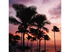 ハワイのビーチを思い出し・・・ハワイアンミュージック特集をお届け!