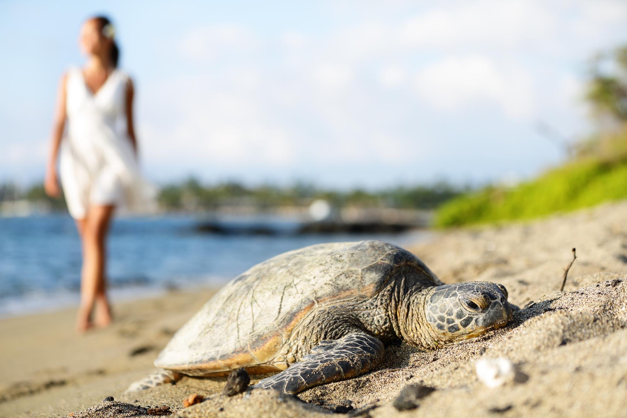Turtle on beach, walking woman, Big Island, Hawaii