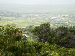 ハワイのコーヒーの勢力図が変わる!? ハワイ島カウ地区生まれ「カウコーヒー」の味わいをドリップパックで楽しもう